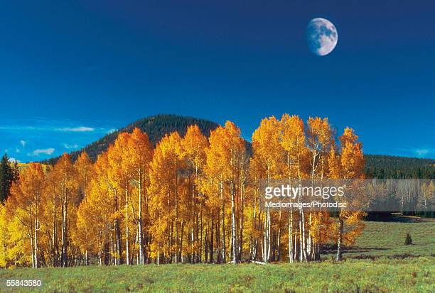 Moon over a landscape, Monument Valley Navajo Tribal Park, Arizona, USA