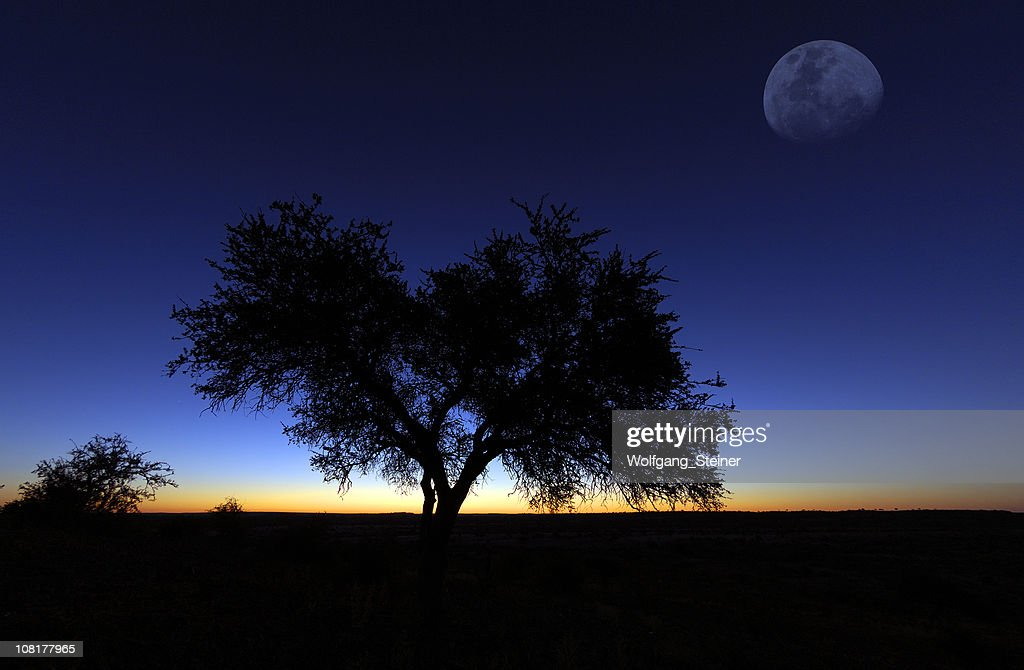 Moon over mashatu : Stock Photo