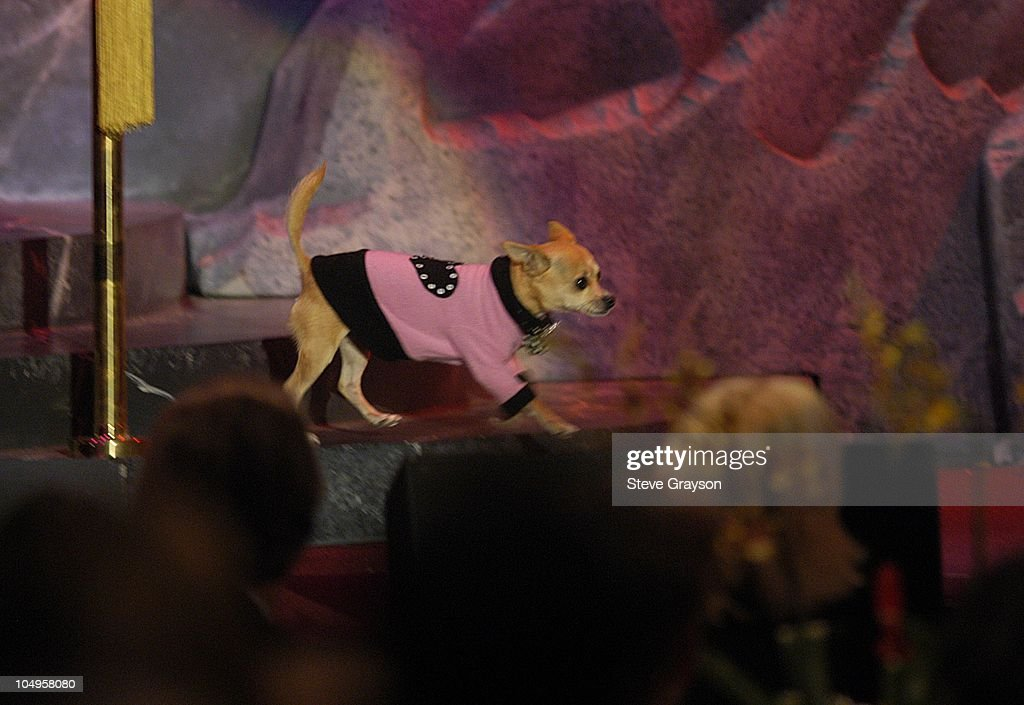 'Moondoggie' during The 17th Annual Genesis Awards - Show at The Beverly Hilton Hotel in Beverly Hills, California, United States.