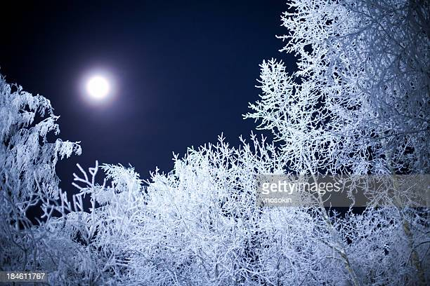 Moonlight shining down on a snowy forest in the winter