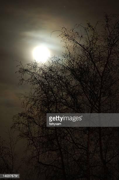Moonlight Silhouette #2