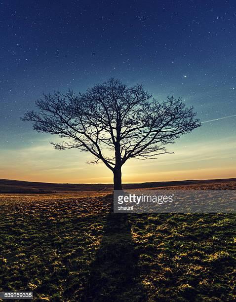 月明かりの枝