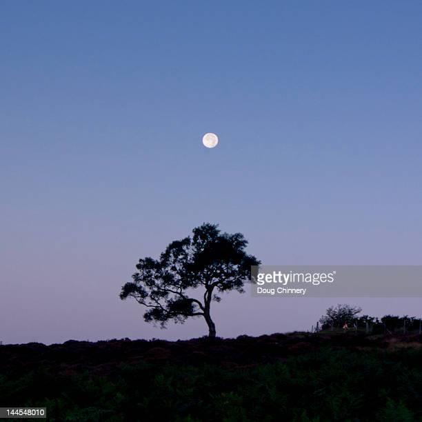 Moonrise over lone tree