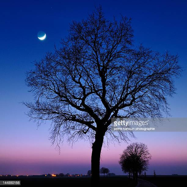Moonrise with oak trees