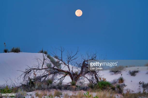 Moonset Over Dead Snag