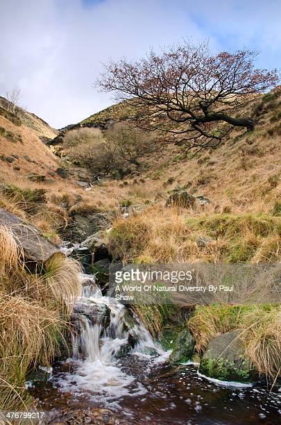 Moorland Stream & Leaning Tree.