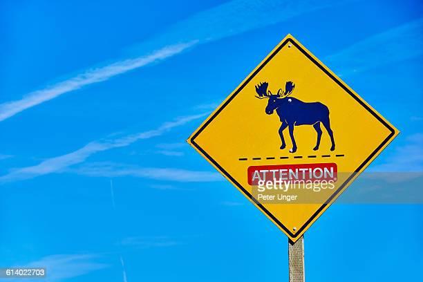 Moose crossing sign,Nova Scotia