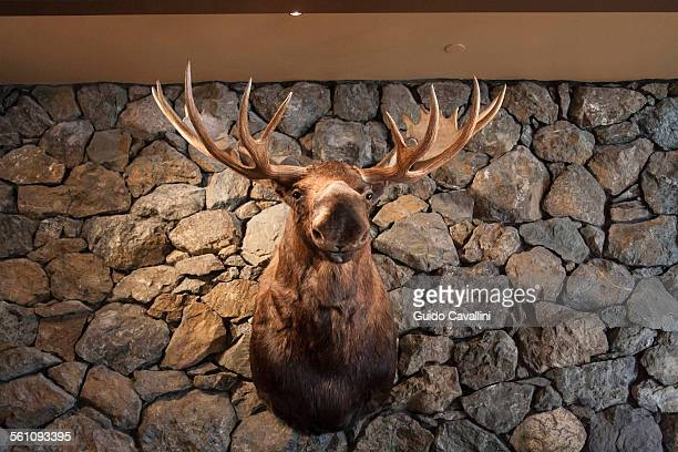 Moose head mounted on stone wall