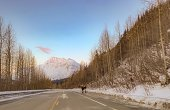 Picture of Moose in Alaska. Moose stepped out onto roadway.
