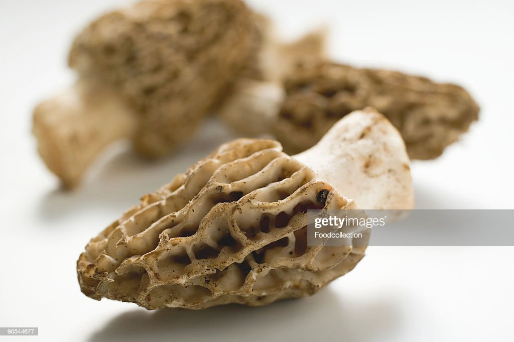 Morel mushrooms on white background, close up : Photo