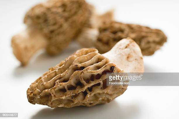 Morel mushrooms on white background, close up