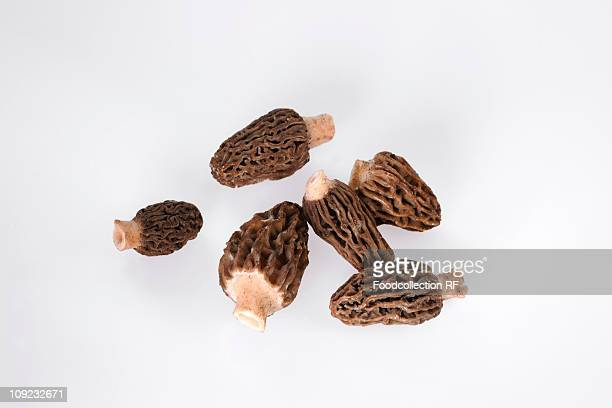 Morel mushrooms on white background