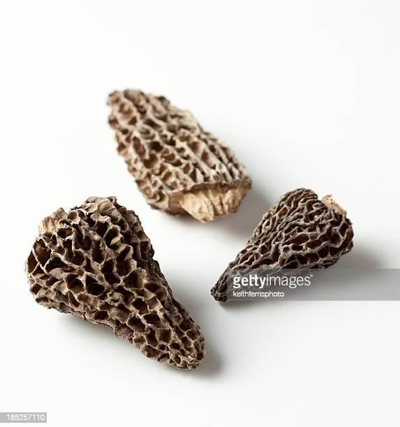 Champignons Morille