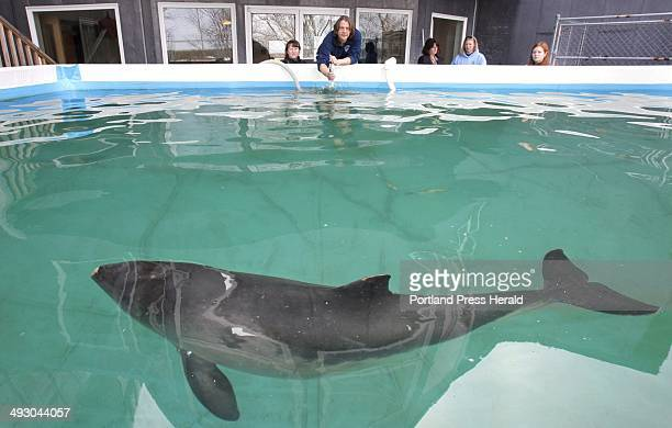 Morgan Lawless left and Keith Matassa feed a harbor porpoise at the Marine Animal Rehabilitation Center at the University of New England in Biddeford...