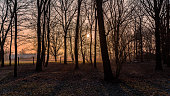 Bäume in der winterlichen Morgensonne in Hamburg-Neuengamme