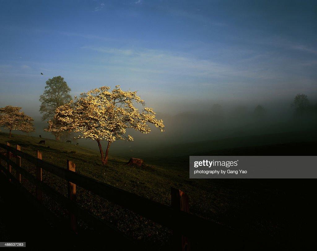 Morning at Smoky Mountains