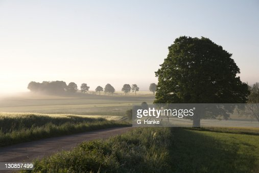 Morning atmosphere with lime (Tilia) and road in fog, Saxony, Germany, Europe