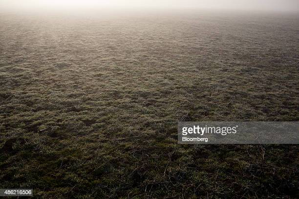 Morning dew clings to grasses in a pasture typical of the Argentine Pampas in Duggan Argentina on Friday July 24 2015 The Pampas are the great plains...