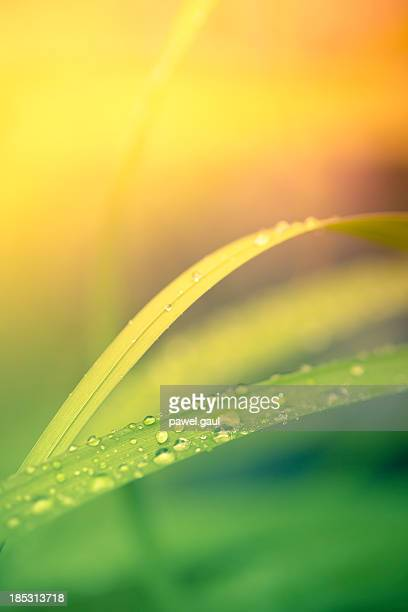 Morning dew on blades of grass with bright background
