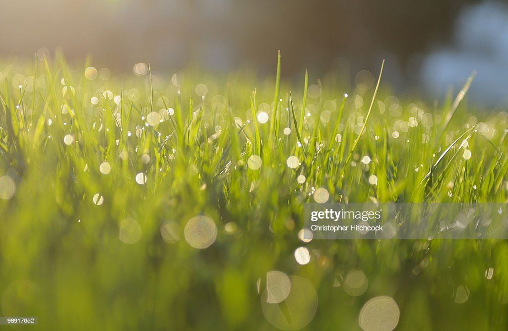 Morning dew on grass : Stock Photo