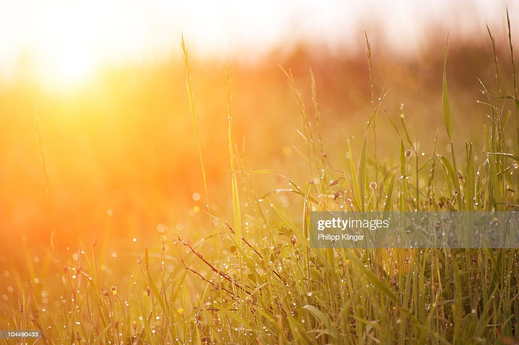 Morning Dew : Stock Photo
