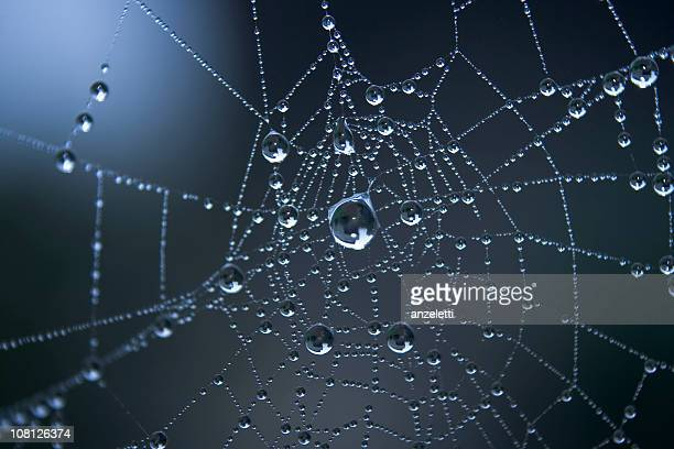 Morning dew trapped on a spider web