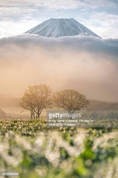 Morning Dew with Mt.fuji