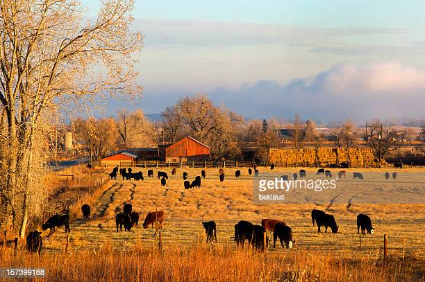 Morning Farm Scene