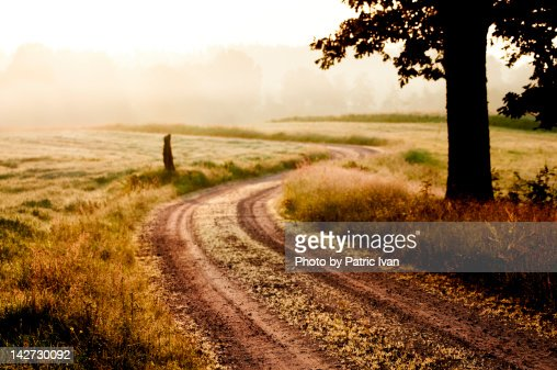 Morning fog at country : Stock Photo