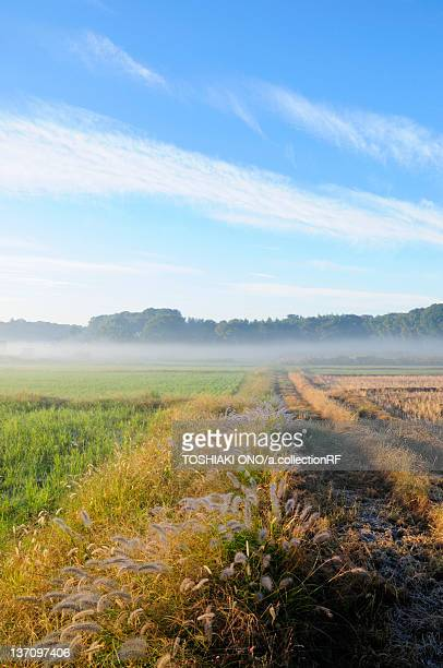 Morning fog at rice paddies, Chiba Prefecture, Japan