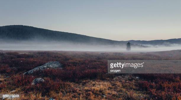 Morning Fog in the vicinity of the autumn mountain pass Ulaganskiy. Altai, Russia