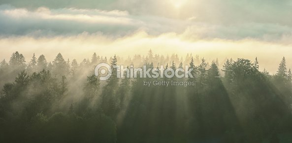 Morning fog with sun rays on the wooded mountans. : Foto de stock