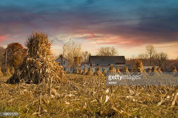 Du matin Harvest