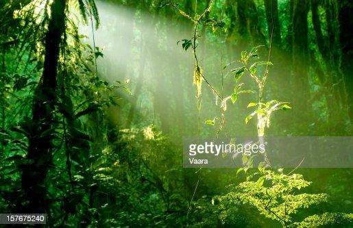 Morning in Rainforest