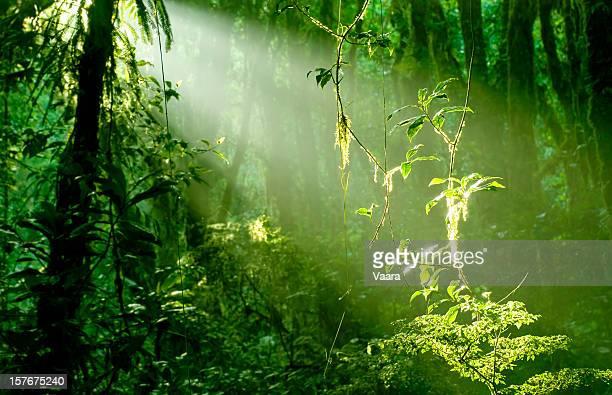 Manhã na Floresta pluvial