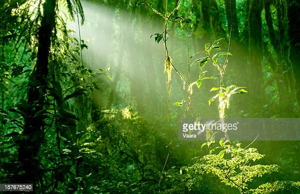 Mañana en el bosque tropical