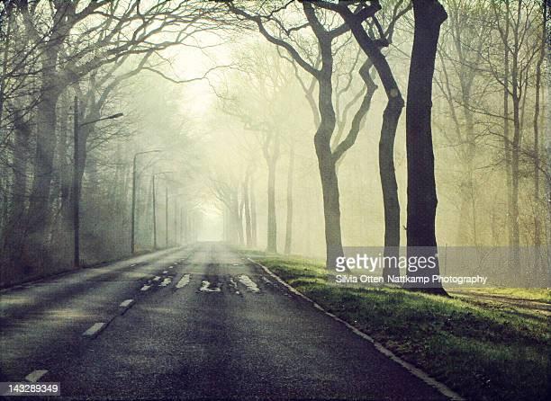 Morning light falls on road