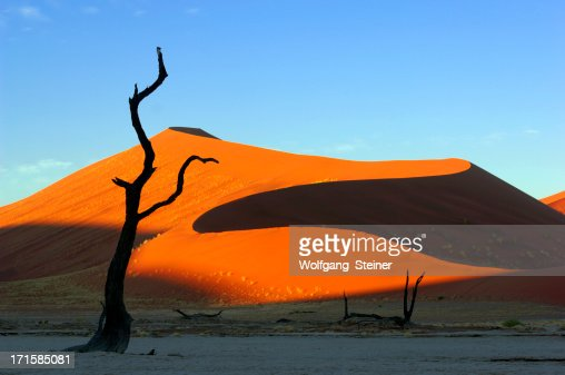 Morning light on a dune with tree in foreground