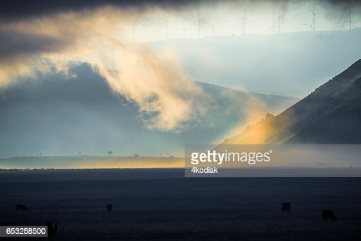 Morning Light : Stock Photo