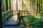 Morning Light Rays shining on a nature walkway in the woods.