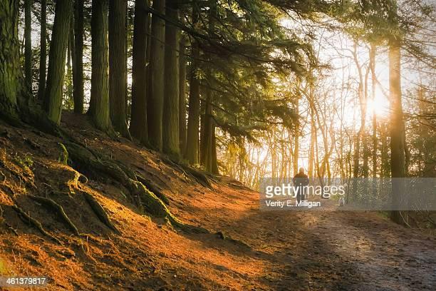 Morning Light through Winter Trees