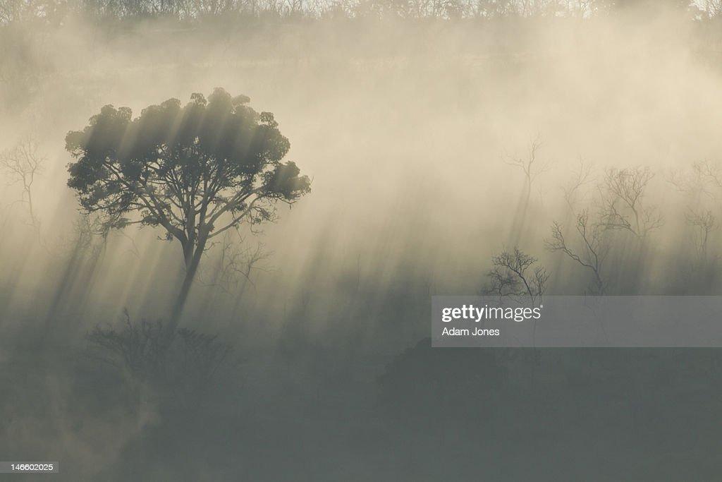 Morning mist and sunlight filtering thru trees : Stock Photo