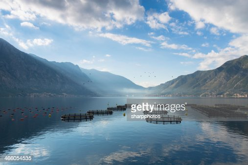 Morning mist on Kotor bay : Stock Photo