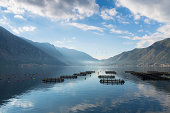 Cage aquaculture on Boka Kotorska in Montenegro