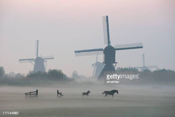 Morning mist surrounds foal and mare while walking before windmills