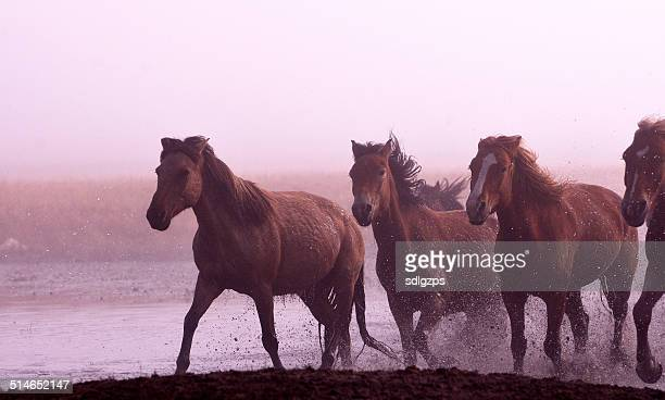 Morning of The Ulan integration grassland