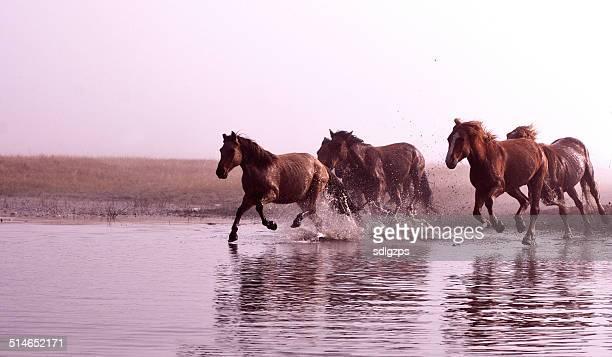 Morgen des Ulan integration grassland