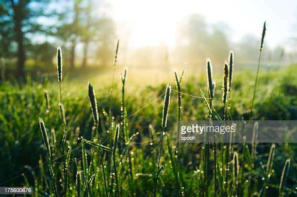 Morgen auf meadow