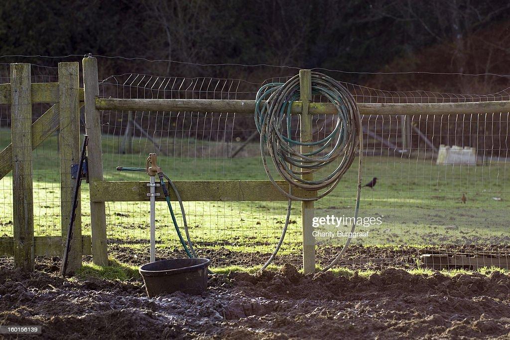 Morning on the farm : Stock Photo