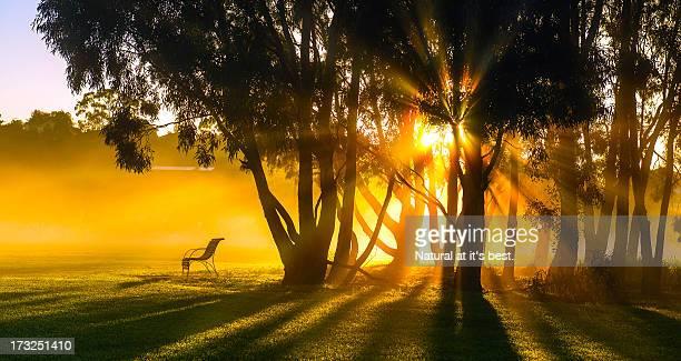 Morning rays at Fairbains park